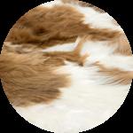 Natural WHITE-BROWN